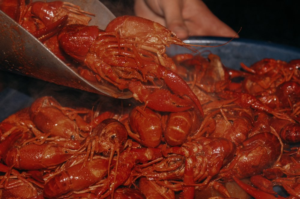 Busters Crawfish & Seafood Cleburne: 1707 S Main St, Cleburne, TX