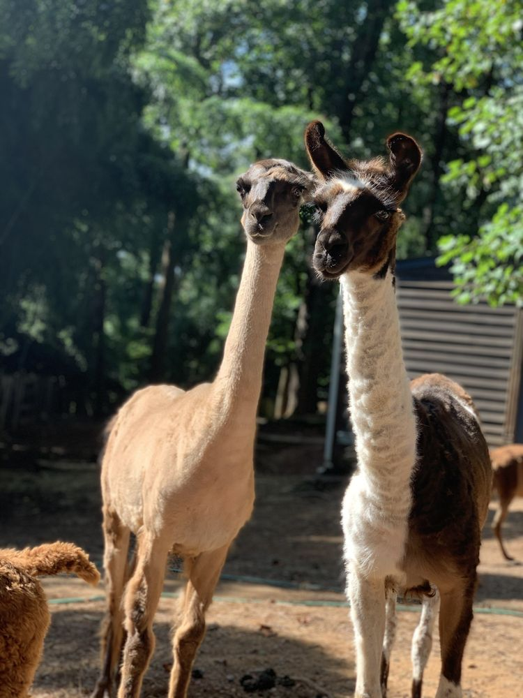 Alpaca Treehouse in the Bamboo Forest: 1162 Fayetteville Rd SE, Atlanta, GA