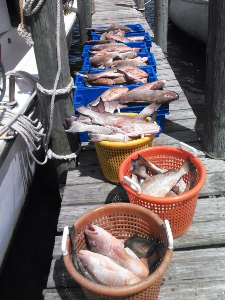Island Seafood Market: 4330 Pine Island Rd, Matlacha, FL