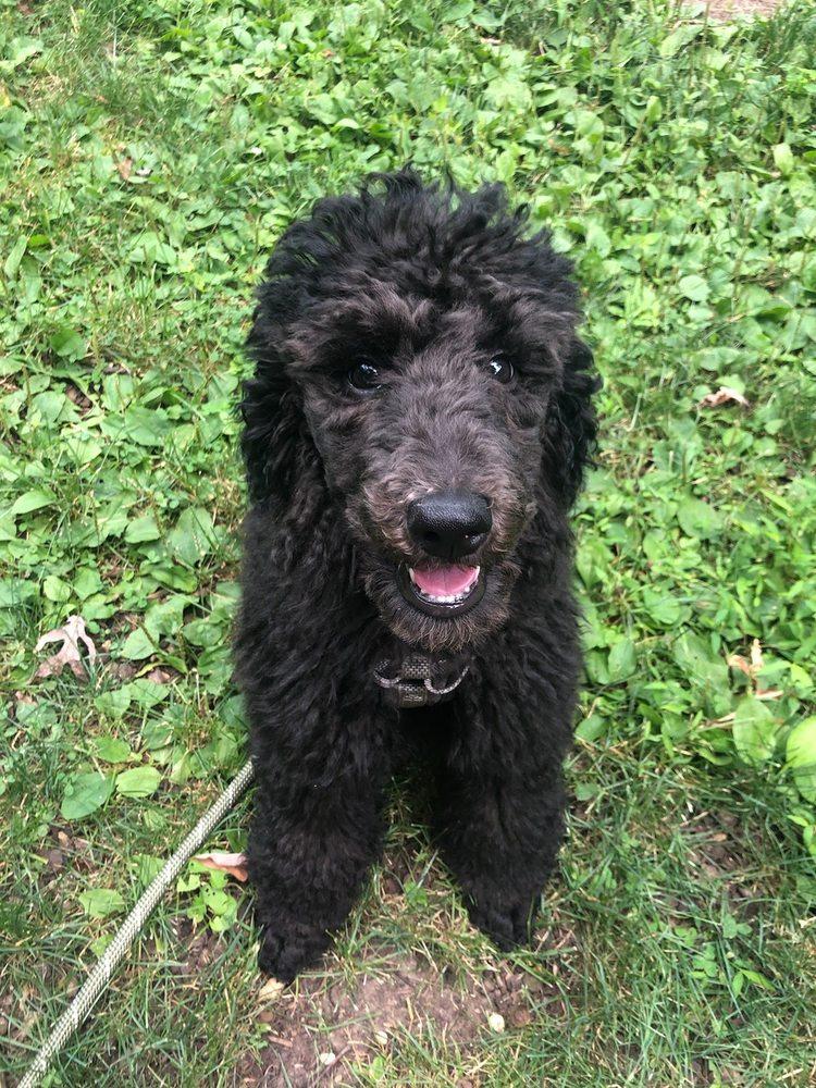 Jersey Dogs: 147 Franklin St, Bloomfield, NJ
