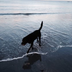 Kittery Me Dog Friendly Beach