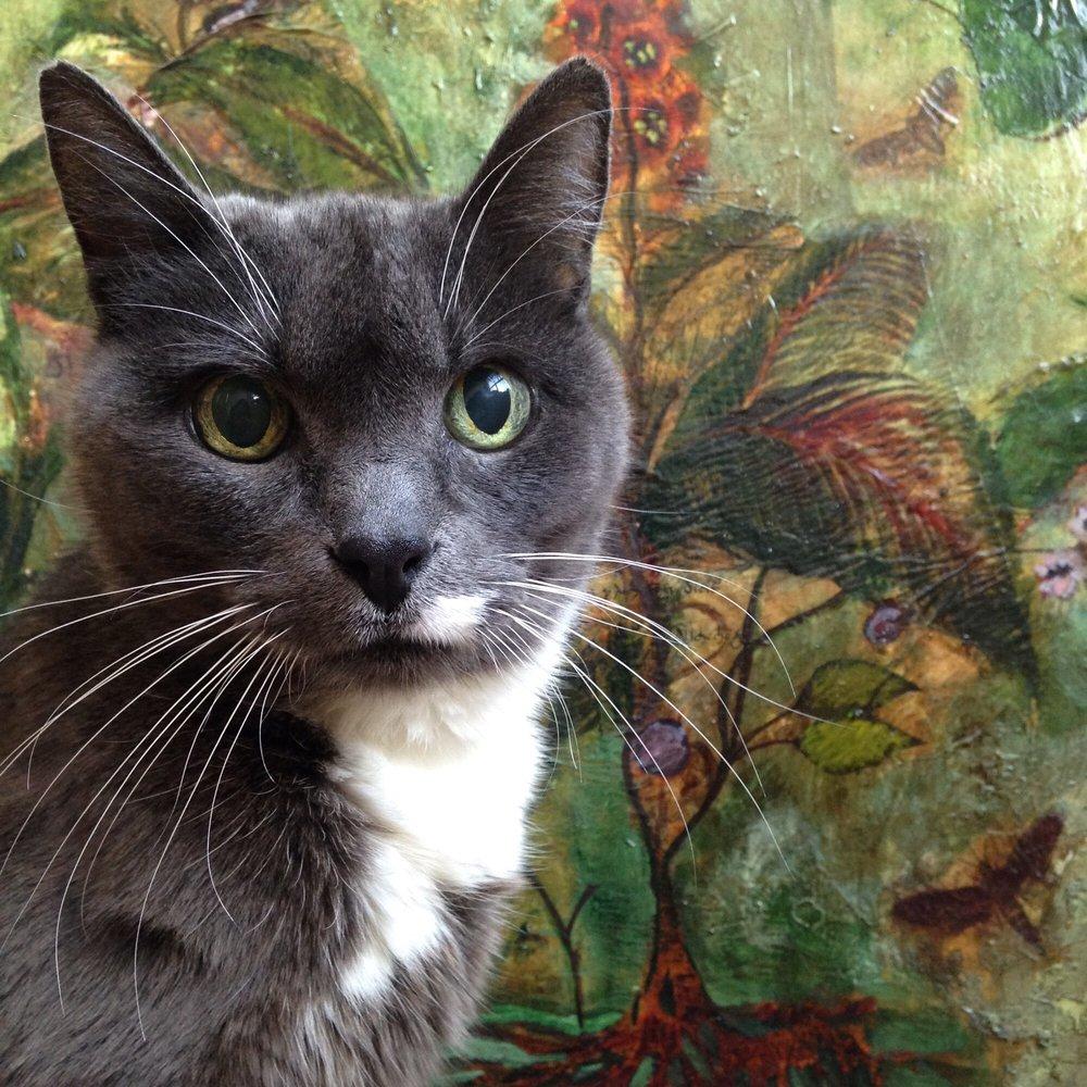 Diane S Seattle Cat Sitting Service 10 Photos Pet