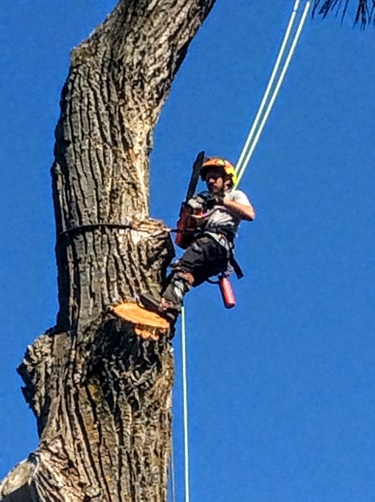 Lata Tree Service: 9625 Merrimac Rd, Mancelona, MI