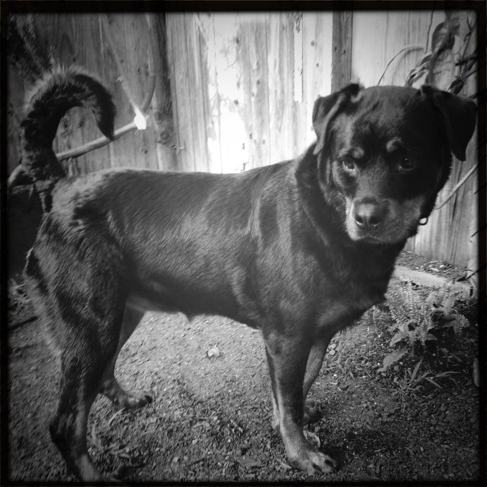 Dogtown Dogwalker: 1242 Palms Blvd, Venice, CA
