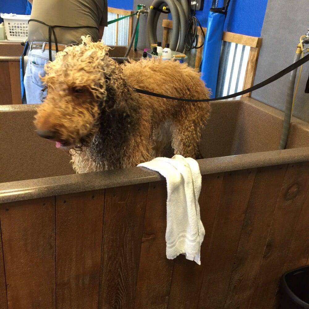 Self Service Dog Wash Fort Worth