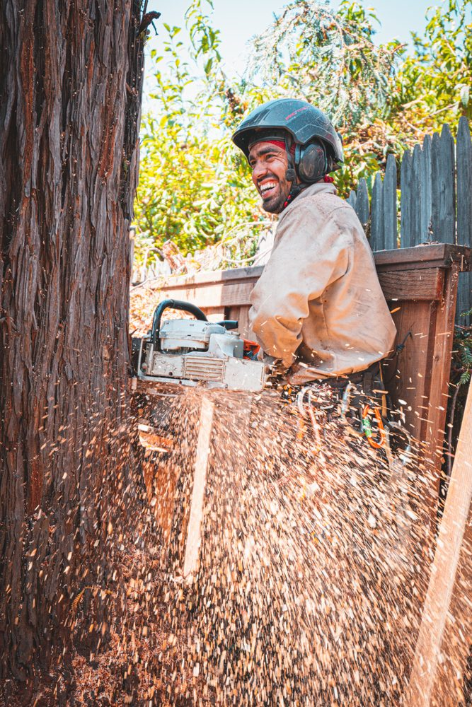 Julian Tree Care