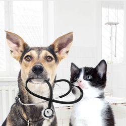 Cochrane Animal Hospital - 10 Photos & 43 Reviews