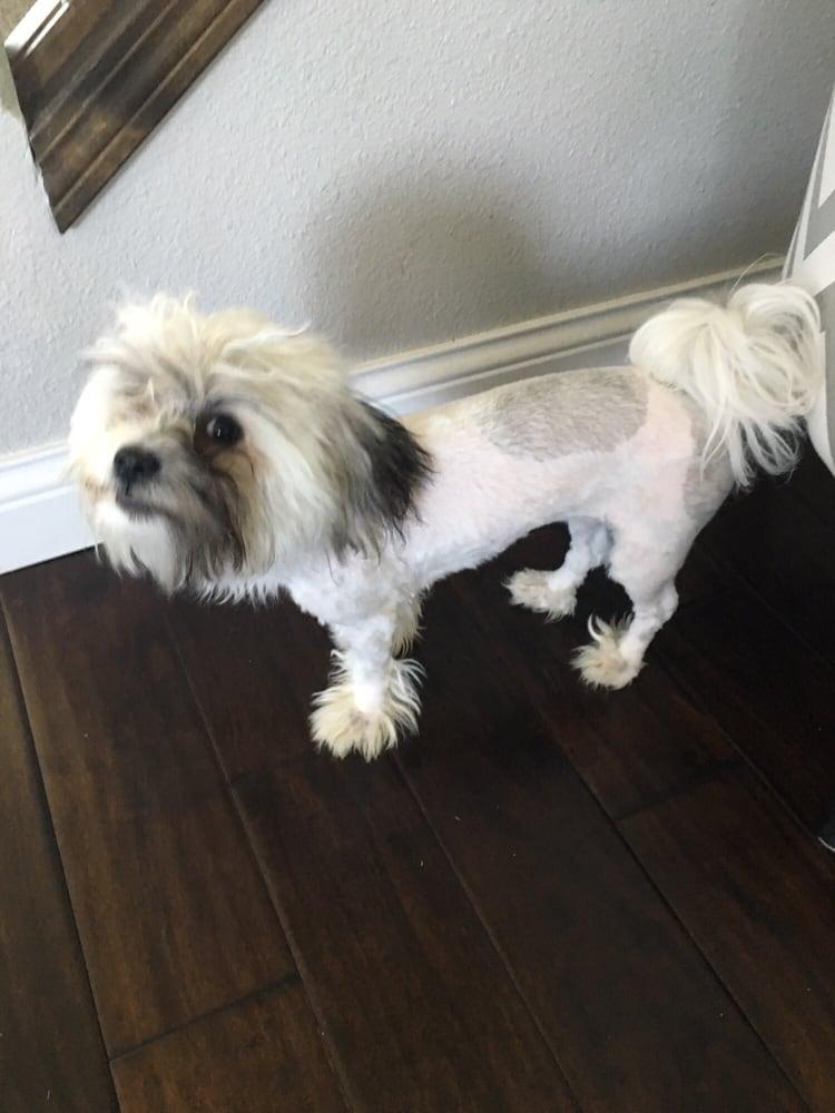Bad Haircut By Petsmart Grooming Yelp