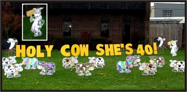 Holy cow lawn greeting lawn sign birthday lawn signs yelp photo of kbe yard designs westland mi united states holy cow lawn m4hsunfo
