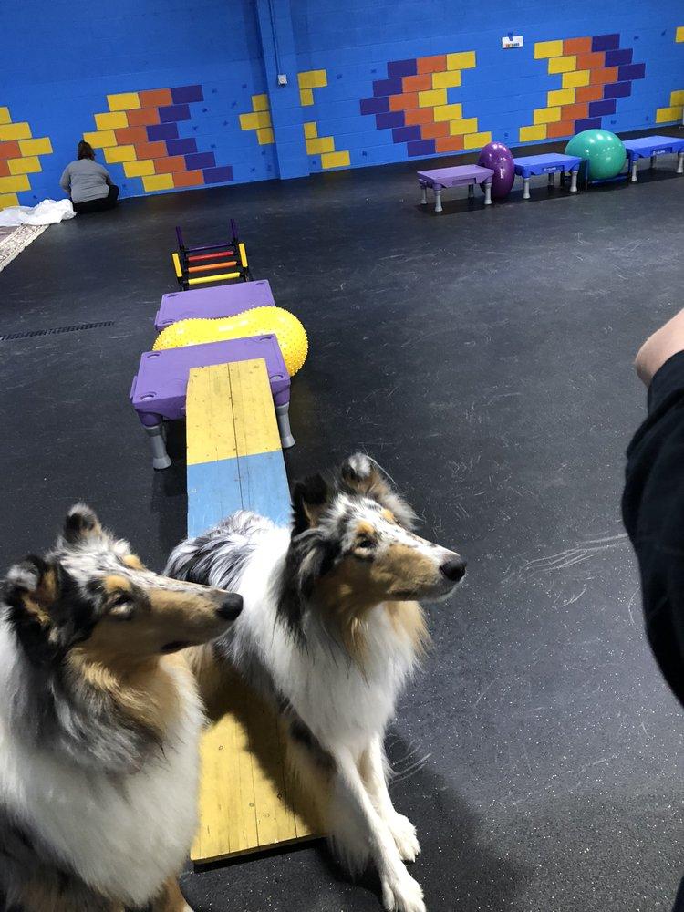 Blue Ribbon Dog Academy: 2056 & 2060 Morgantown Rd, Uniontown, PA