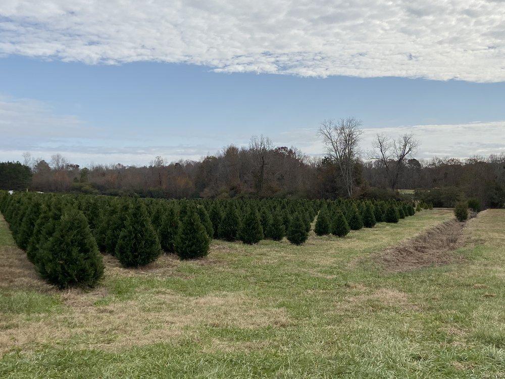 Berry's Christmas Tree Farm