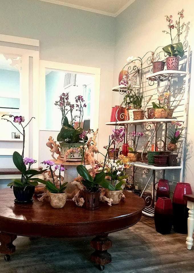 Petals & Vines: 901 Simonton St, Key West, FL