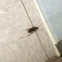 Photo Of Parliaments   Annandale, VA, United States. There Are Plenty Of  Roaches