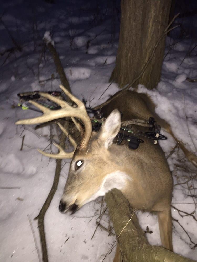 Hoof's Taxidermy: 3335 180th St, Lester Prairie, MN