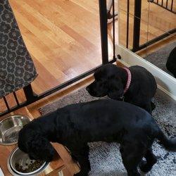 Puppy City - 49 Reviews - Pet Stores - 2539 Ocean Ave