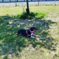 Dog Park Warwick Ri