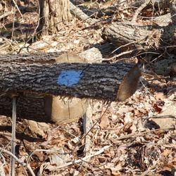 Photo Of Monte Sano State Park   Huntsville, AL, United States. Some Trees