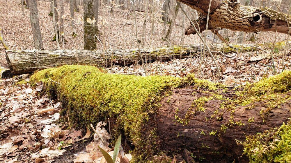 Highlands Nature Sanctuary: 7660 Cave Rd, Bainbridge, OH
