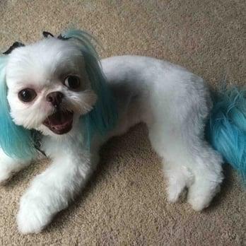 Lucky Dog Grooming 119 Photos 108 Reviews Pet Groomers 6832
