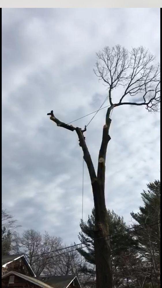 American Eagle Tree Service: Amityville, NY