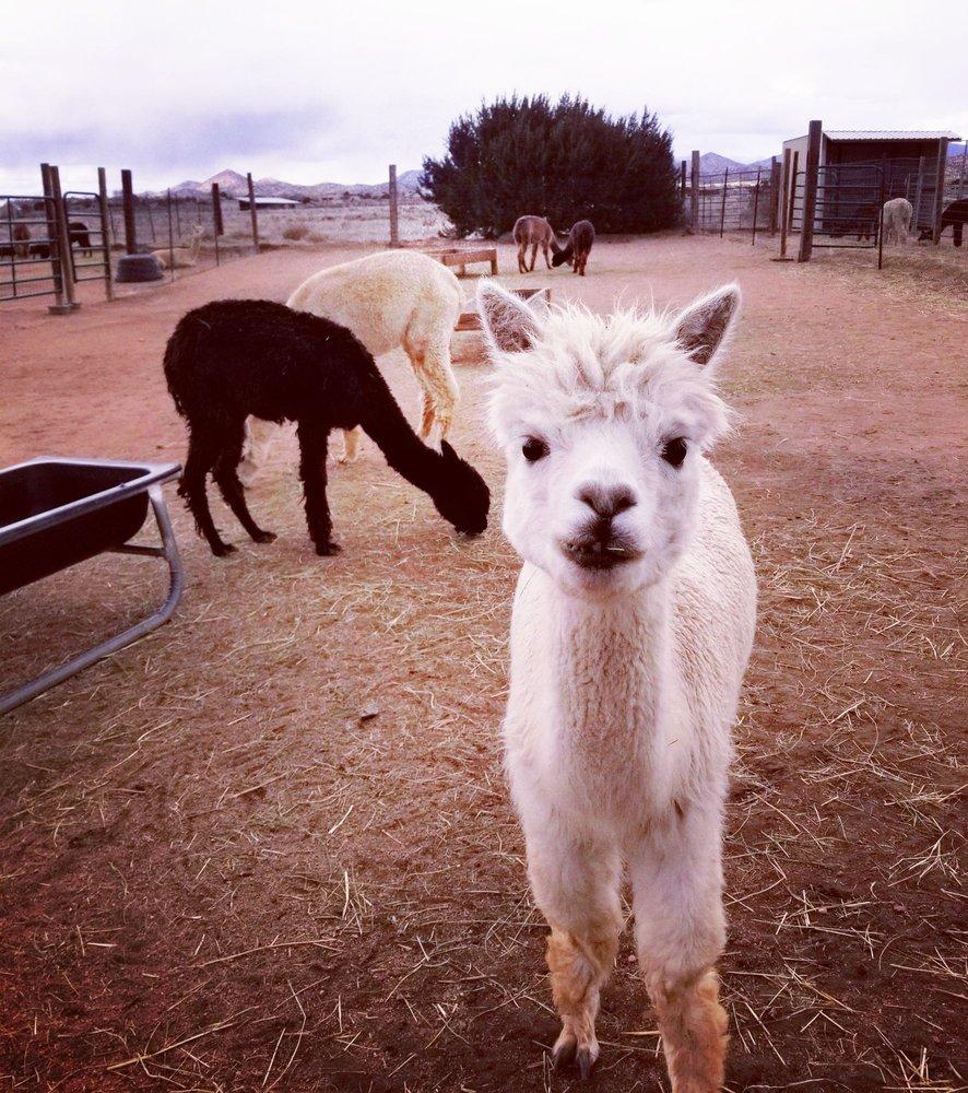 Blue Mesa Alpacas: 10 Blue Mesa Rd, Santa Fe, NM