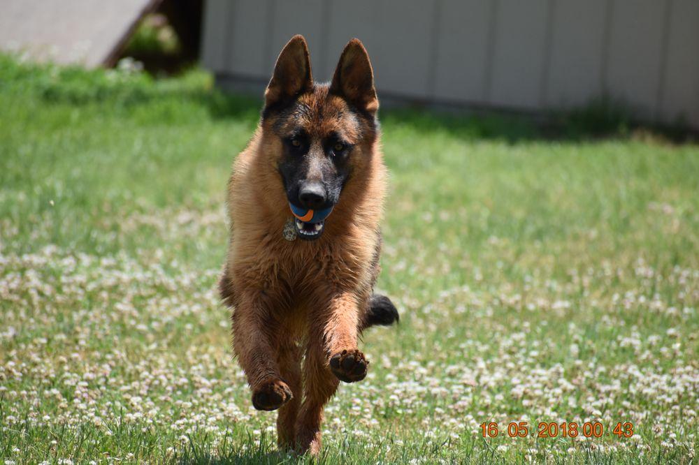 Brush Creek Dog Training & Boarding: 6507 S Brush Creek Rd, Stillwater, OK
