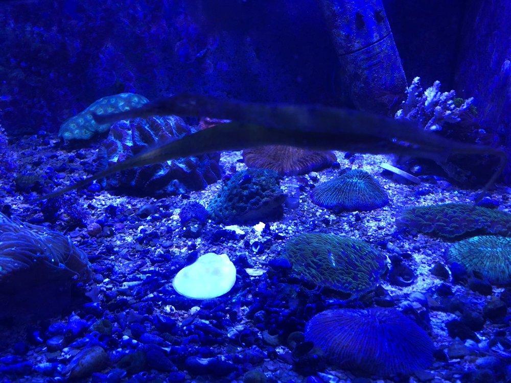 Epic Corals: 639 Washington St N, Twin Falls, ID