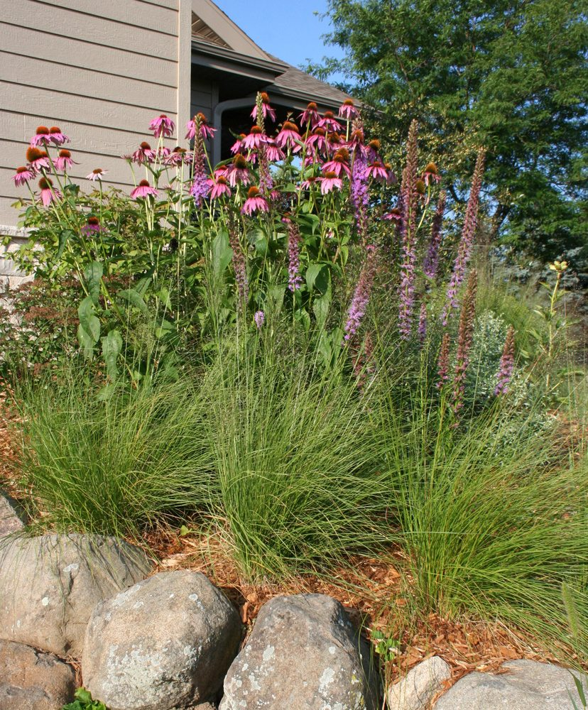 Native Wisconsin Plants: Native Plants And Boulders, Madison, Wisconsin