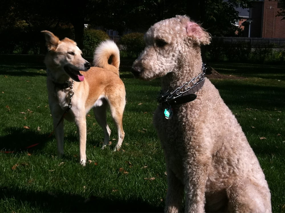 Four Paws Pet Sitting & Dog Walking: 16W665 Third Ave, Bensenville, IL