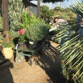 Photo Of Village Nurseries Orange Ca United States Sarah