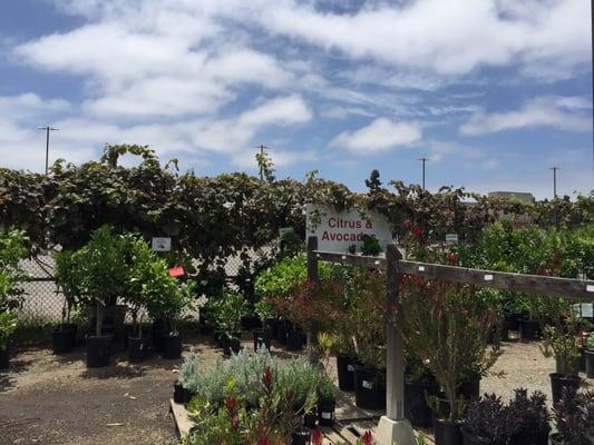 Walter Andersen Nursery San Go Ca Best 2017