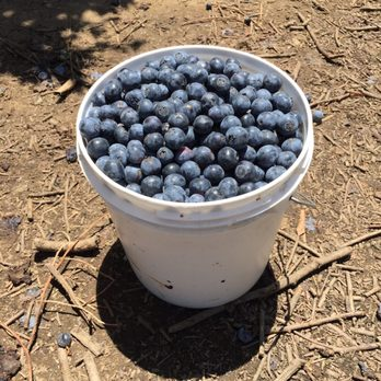 Photo Of Ott Farms Modesto Ca United States Bucket Blueberries