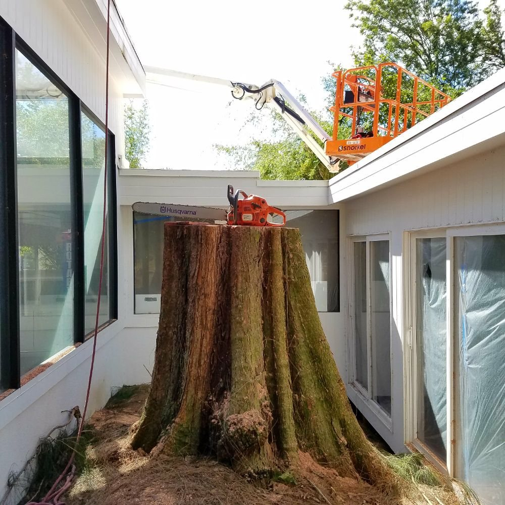Bassett Tree Service