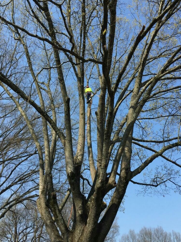 Arbor Country Tree Service