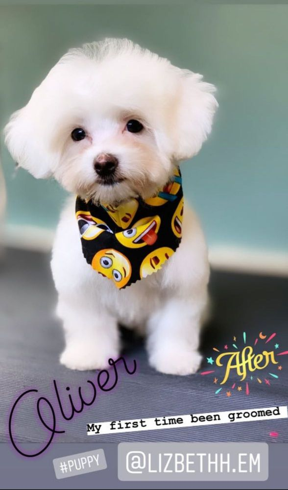 Dog Fashion Mobile Grooming: West Covina, CA