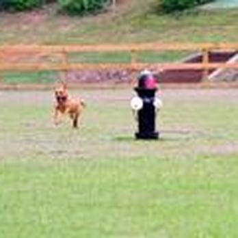 Wiggins Dog Park Conroe Tx