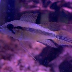Congressional Aquarium - 56 Photos & 73 Reviews - Pet Stores
