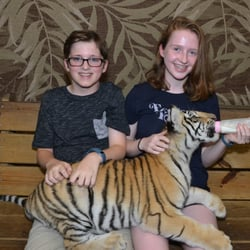 Tigers Preservation Station North Myrtle Beach