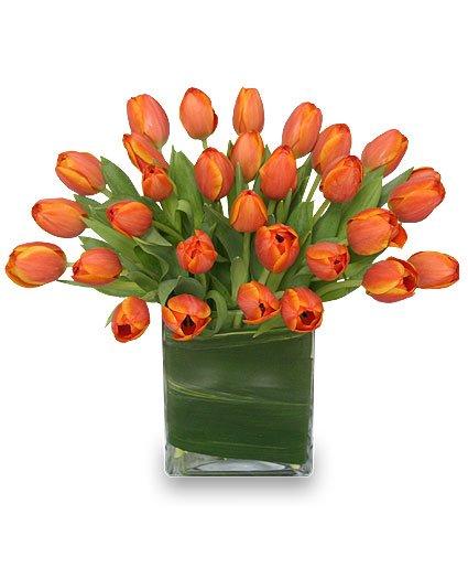 Dockside Florist Garden Center: 163 Daniel Webster Hwy, Meredith, NH