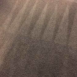 Stay Dry Go Green Organic Carpet Cleaning 106 Photos