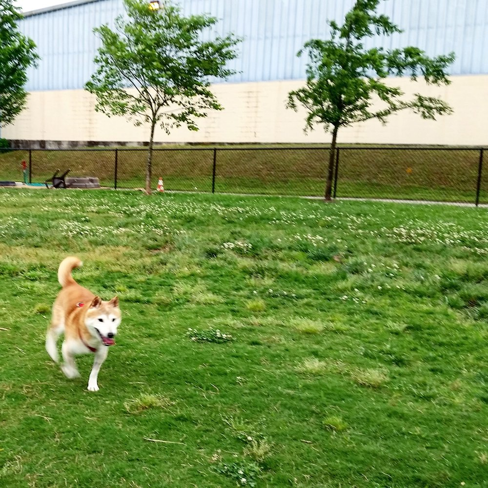 Social Spots from Jackson Downtown Dog Walk