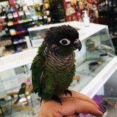 Simbad's Birds & Pets - 12 Photos & 23 Reviews - Pet Sitting - 7201