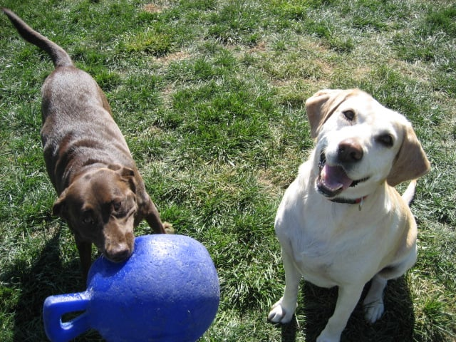 Grand Paws Country Kennel: 26605 Kimberly Dr, Ashland, NE