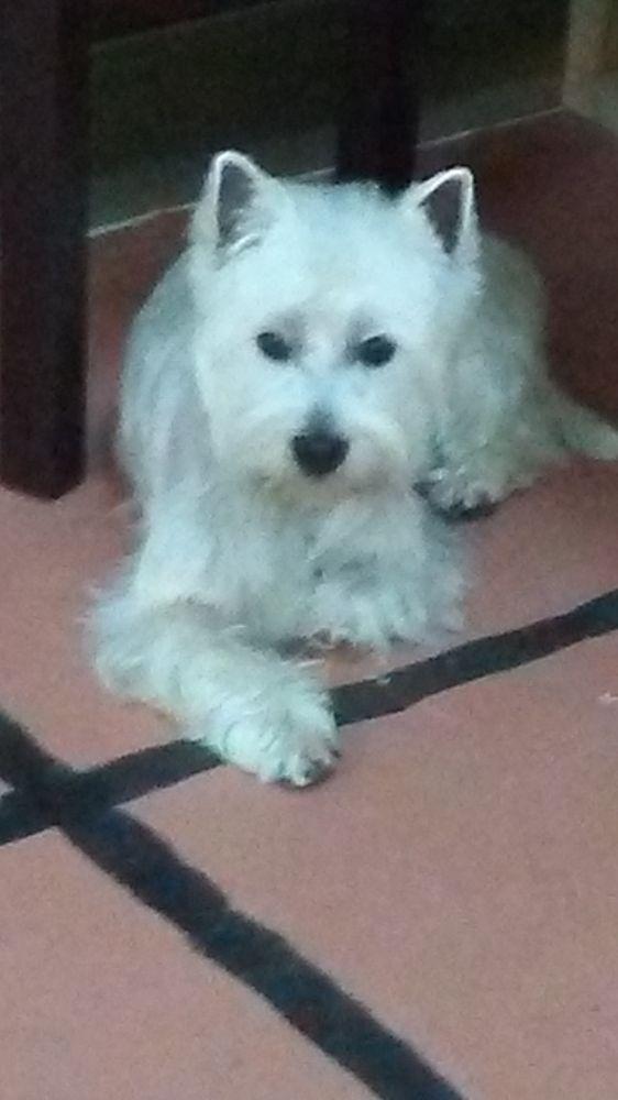 Photos for Buckeye Pets - Yelp