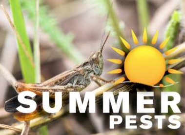 Sleep Tight Pest Control Solutions: 629 Tanglewood Ln, Devon, PA