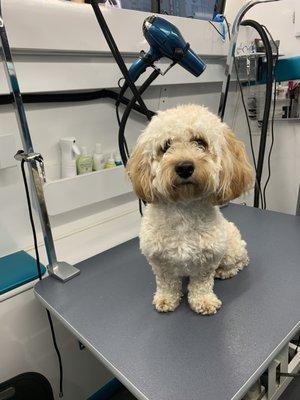 Pawadise Mobile Dog Grooming San Diego, CA Pet Grooming