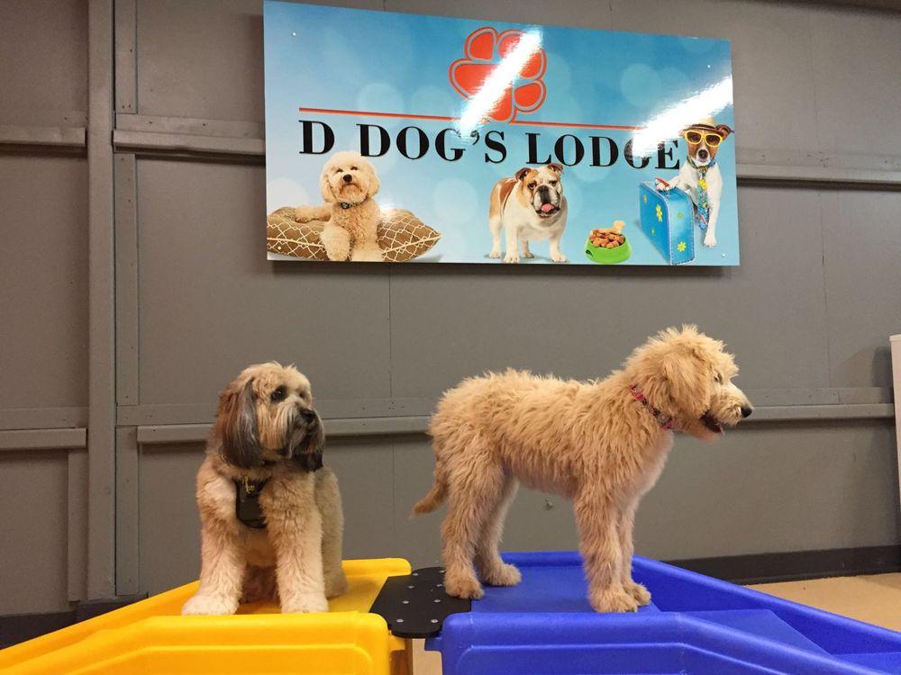 D Dog's Lodge