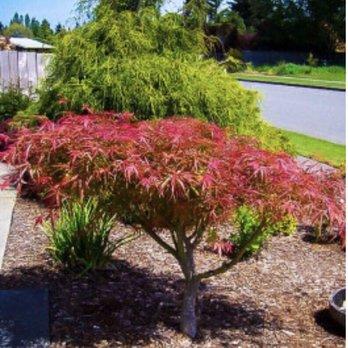 Photo Of Merrifield Garden Center Fairfax Va United States Stock