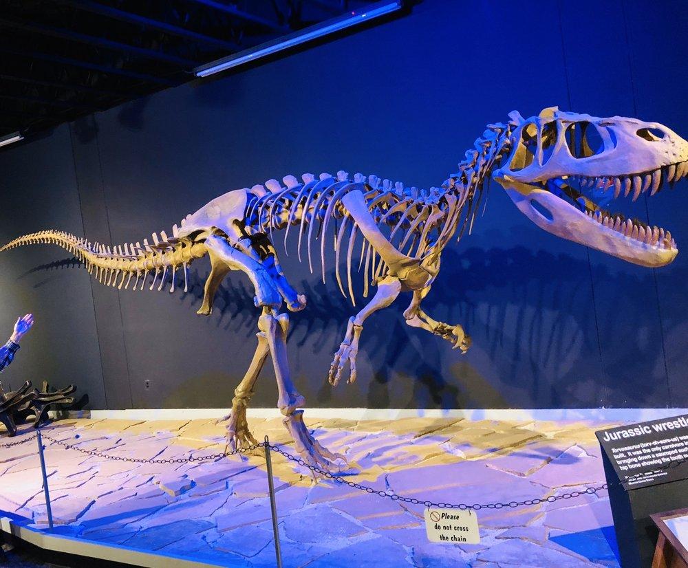 Mesalands Dinosaur Museum: 222 E Laughlin Ave, Tucumcari, NM