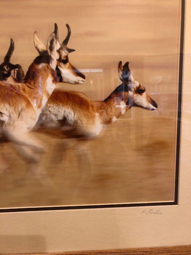 Prescott Valley Pet Clinic: 9501 E Lorna Ln, Prescott Valley, AZ